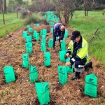 Screening Revegetation (2)