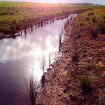 Waterway Revegetation - Boathaugh